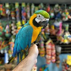 Pájaros guacamayos para tu hogar encantador
