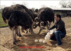 productos de avestruz