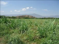 Terreno para siembra, productos organicos, animales engorda