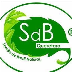 semilla de brasil Queretaro original al mejor precio