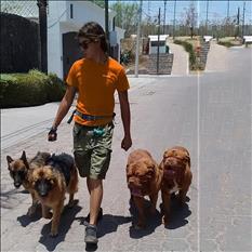 Paseo de Perros Mexicali; Paseando perros Mexicali