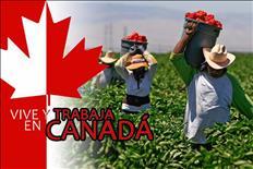 MILES DE TRABAJOS TE ESPERAN EN CANADA