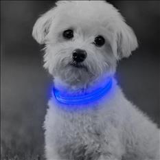 Collar con luz led para Perro, Gato, Mascotas