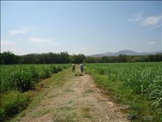 terreno plano con servicios Jojutla Tehuixtla Morelos