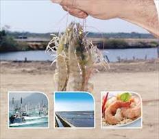 Venta de Camarón y Pescado al Mayoreo