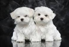 cuccioli più maldestri per l'adozione gratuita