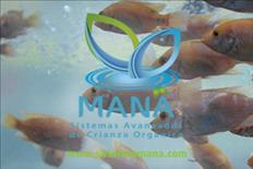 Tecnología acuícola para mayor rentabilidad