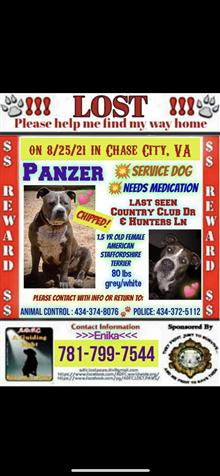 Stolen And Lost Service Dog Panzer (REWARD)